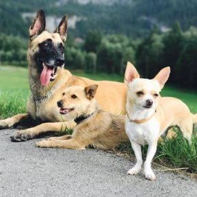 Dogs in Grindelwald Hotel Glacier